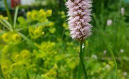 apiflora 5