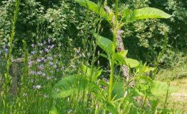 apiflora 7