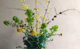apiflora 9